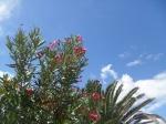 Desert vegetation and blue sky in Salinas