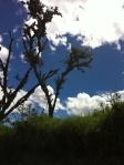 Ecaudor greens and blues