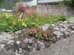 Life in Baños