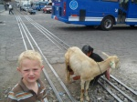 Luke's not sure why a lady is selling goat milk on the train tracks...