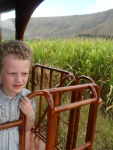 Vaughn on back of train passing sugarcane field.
