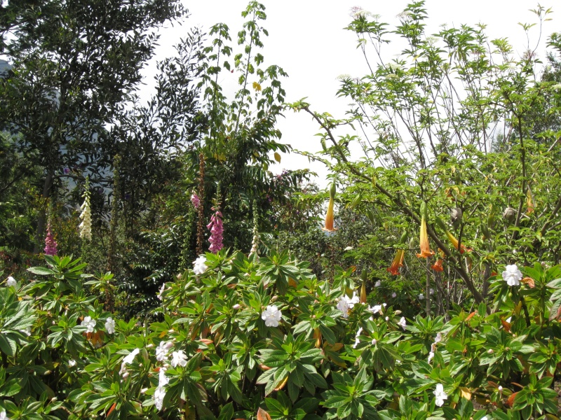 another gorgeous garden